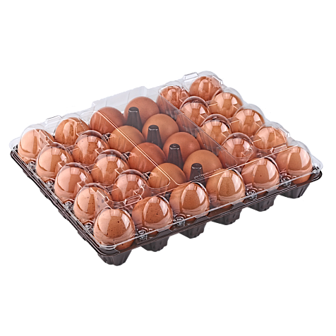 Tray for 30 chicken eggs
