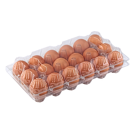Tray for 18 chicken eggs